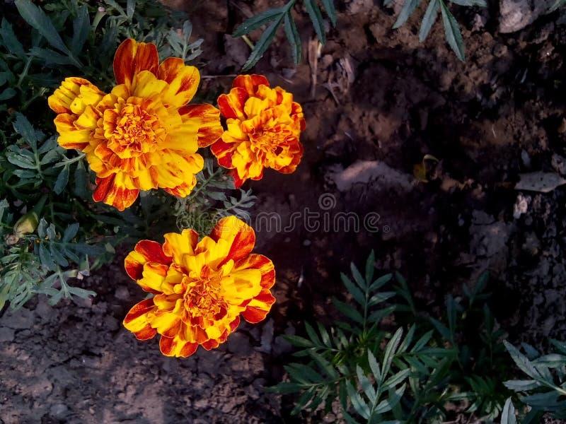 Schoonheid van bloemen stock foto's