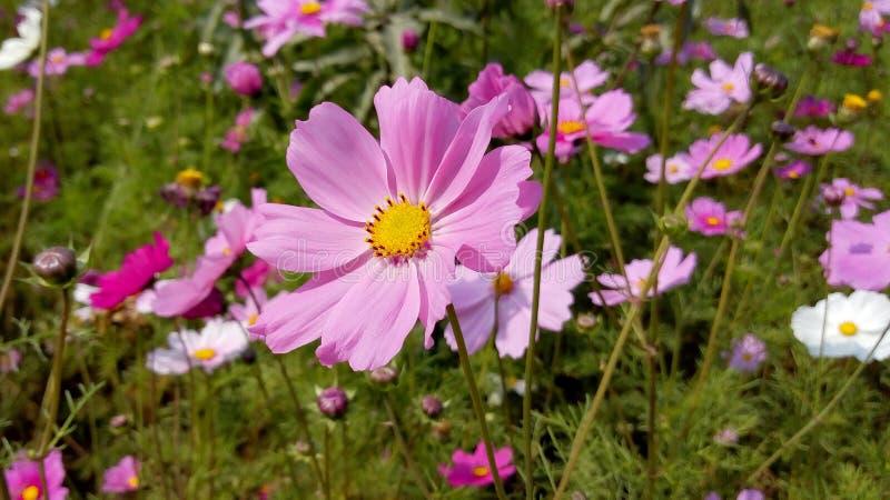 Schoonheid van bloemen die als groot kijken stock foto's