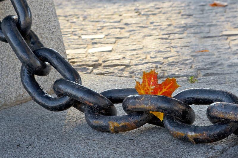 Schoonheid van de langzaam verdwijnende herfst stock fotografie