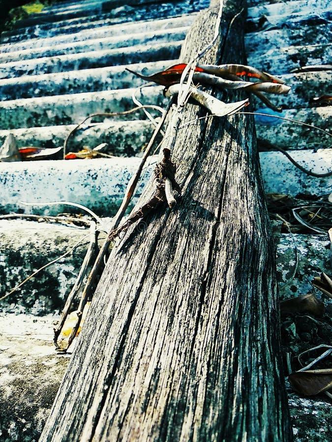 Schoonheid van houten stam royalty-vrije stock fotografie