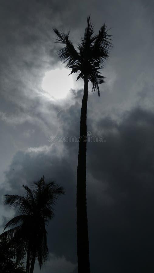 Schoonheid van kokospalm stock foto