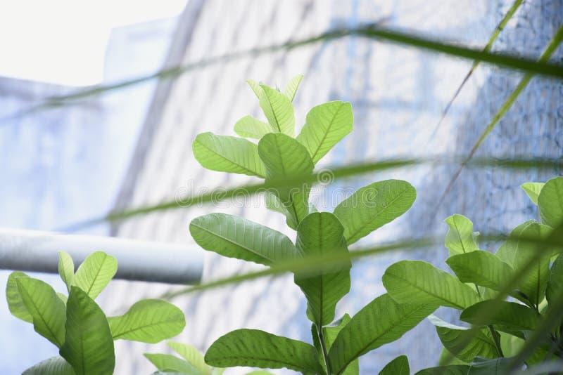 Schoonheid van natuurlijke bladeren van boom royalty-vrije stock foto