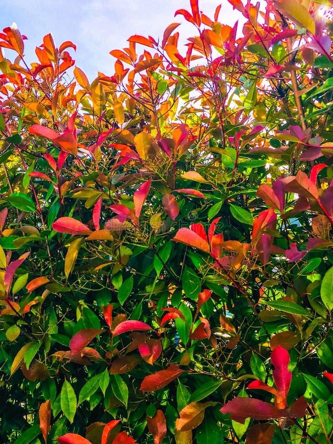 Schoonheid van planten- royalty-vrije stock afbeeldingen