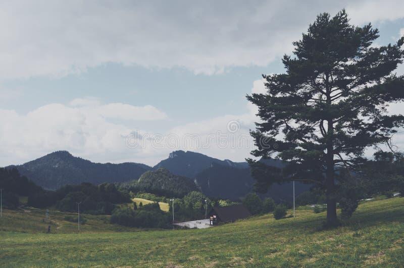 Schoonheidsbergen en grote boom royalty-vrije stock foto