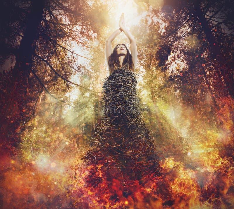 Schoonheidsfoto De boom is het leven De bosbranden doden het leven royalty-vrije stock foto's