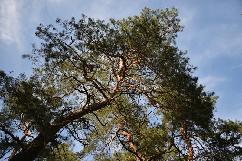 Schoonheidsgrootheid en macht van bomen stock foto's
