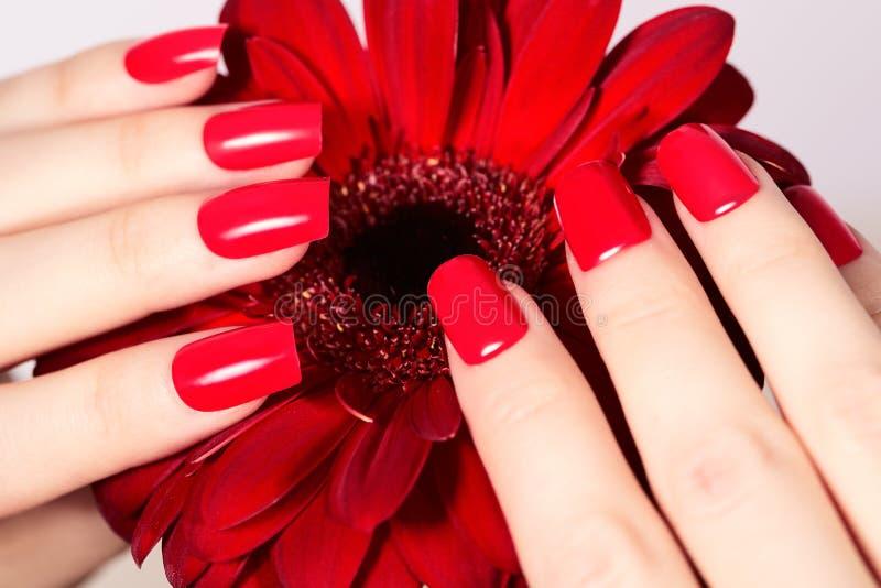 Schoonheidshanden met rode maniermanicure en heldere bloem Mooi manicured rood poetsmiddel op spijkers stock foto's