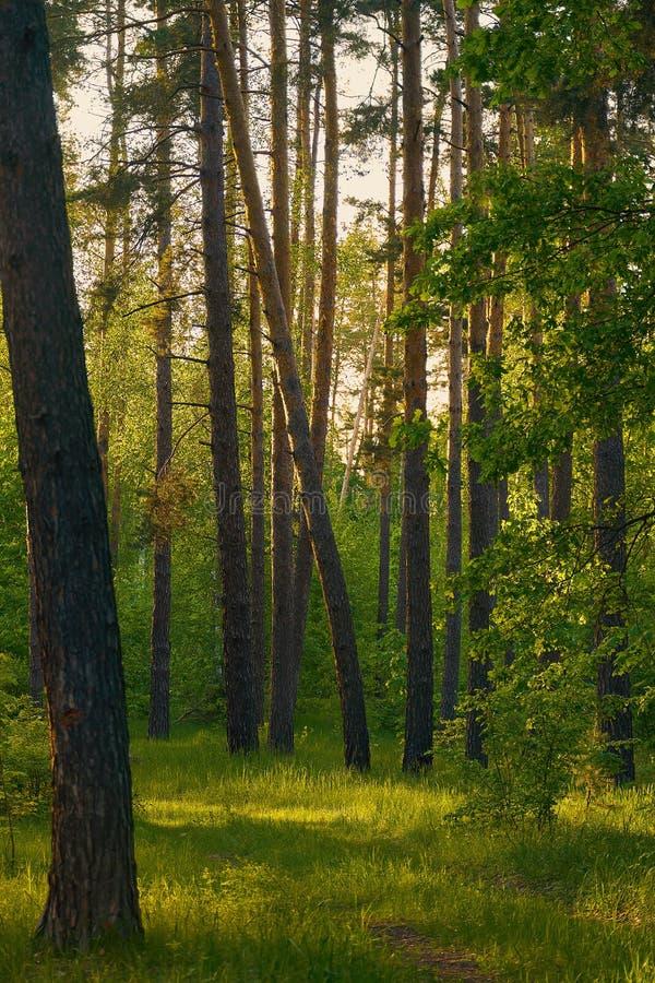 Schoonheidsmening van gemengd bos met oud spoor royalty-vrije stock foto