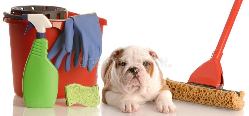 Schoonmaken na nieuw puppy royalty-vrije stock afbeelding