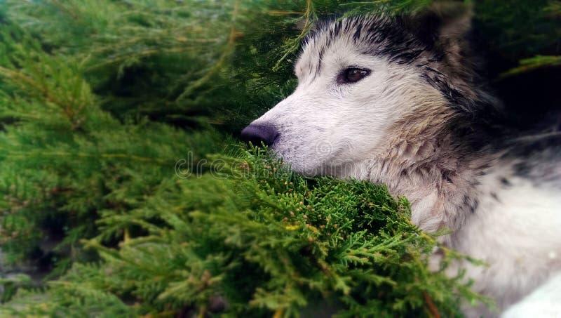 Schor hond stock fotografie