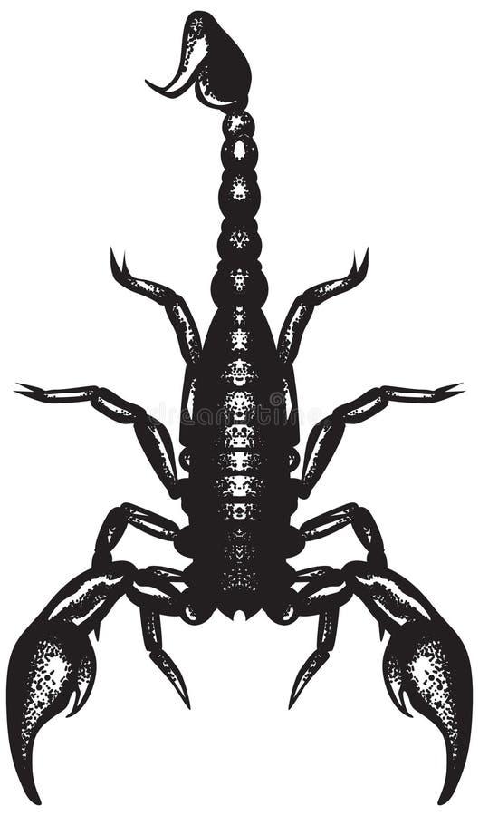Schorpioen stock illustratie
