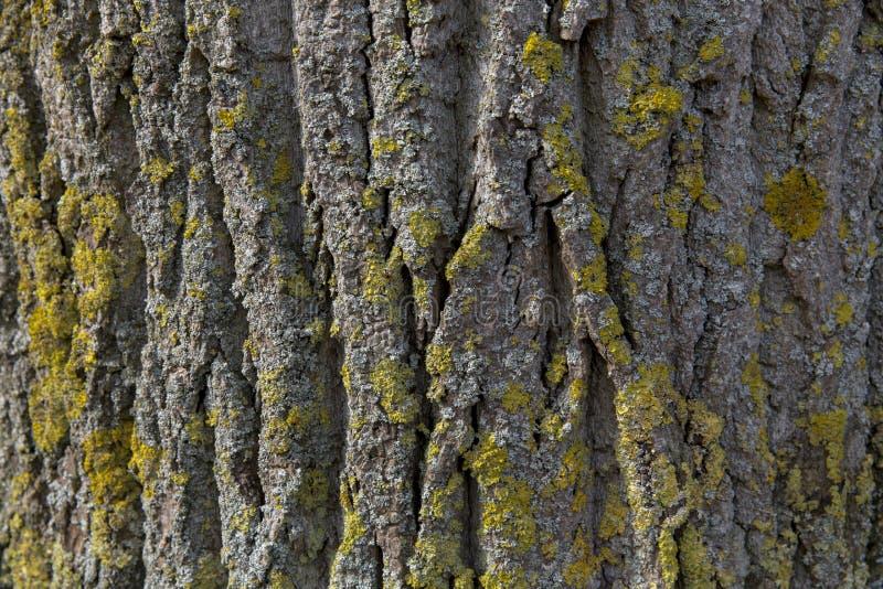 Schors met mos royalty-vrije stock afbeelding