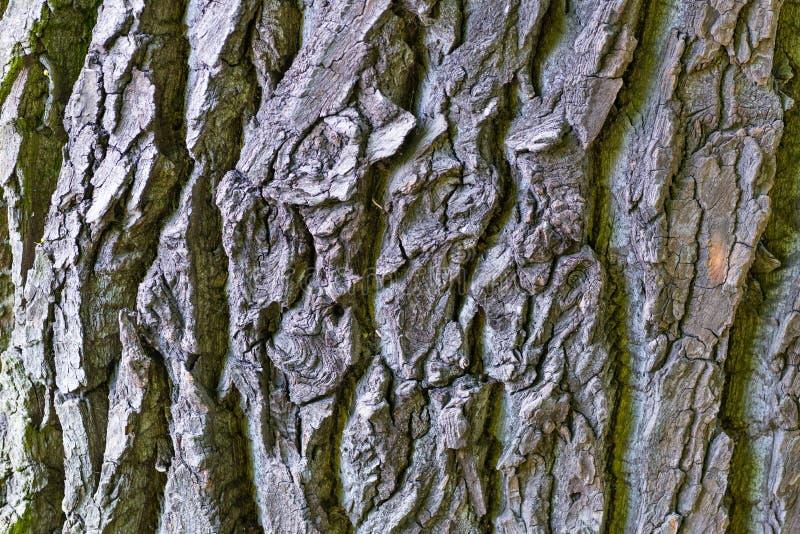 Schors van boom stock fotografie