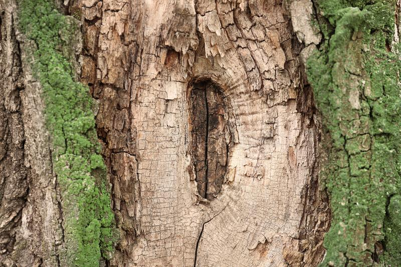Schors van boom, close-up stock afbeelding