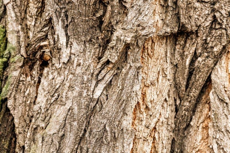 Schors van boom, close-up royalty-vrije stock afbeelding