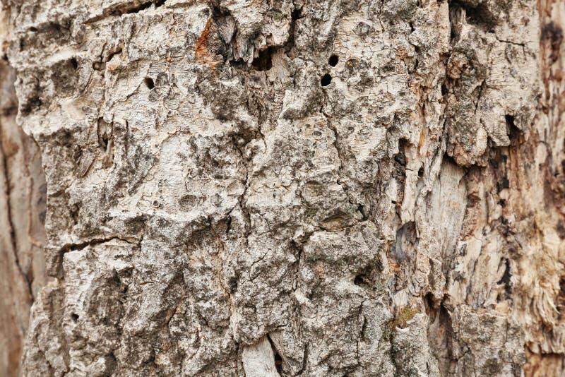 Schors van boom, close-up royalty-vrije stock afbeeldingen