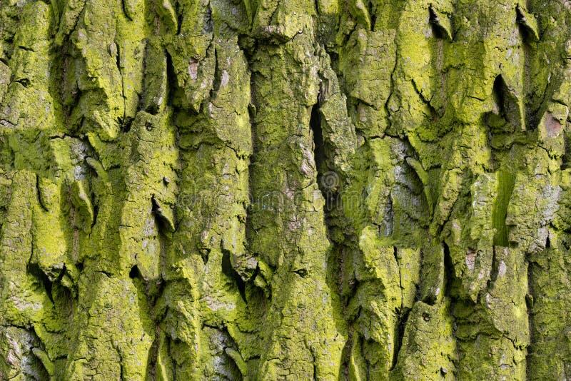 Schors van boom Naadloze Textuur Tileable royalty-vrije stock afbeeldingen