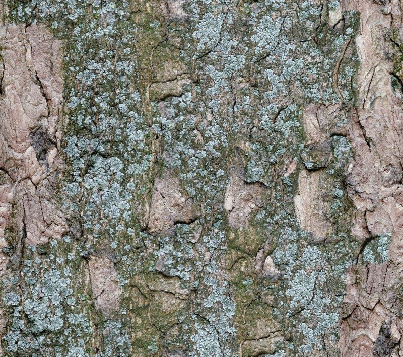 Schors van boom Naadloze Textuur Tileable stock foto