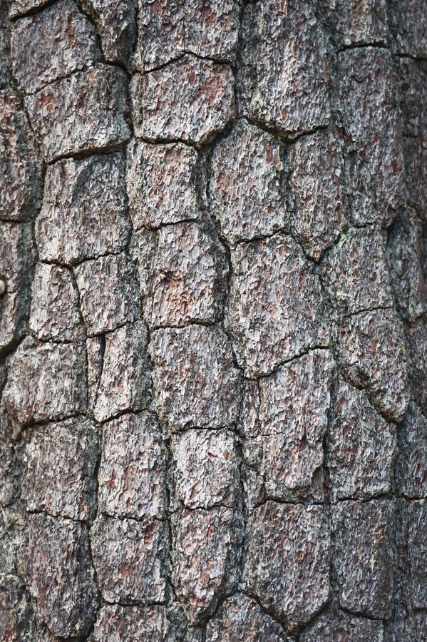 Schors van de Boom van de Pijnboom stock afbeeldingen