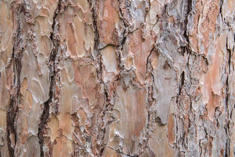 Schors van de textuur van de Pijnboomboom stock foto