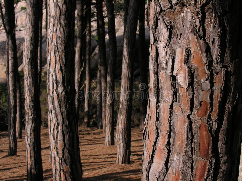Schors van een boom stock foto's
