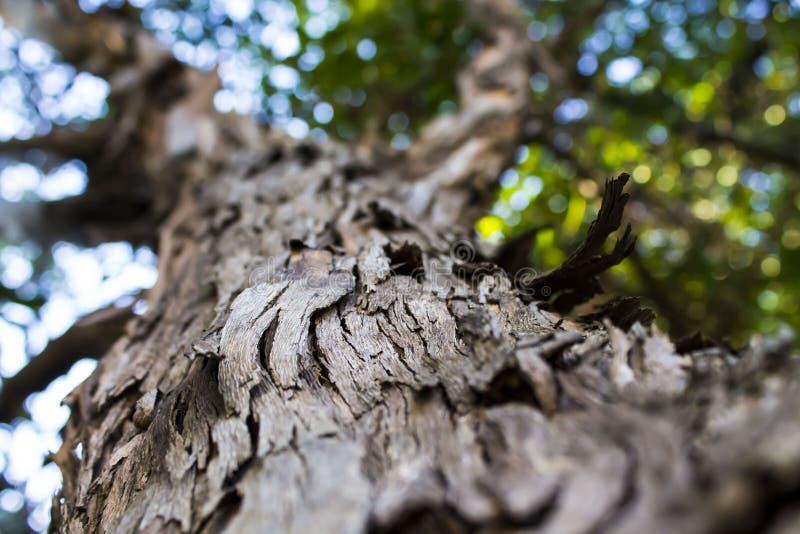 Schors van een boom royalty-vrije stock foto