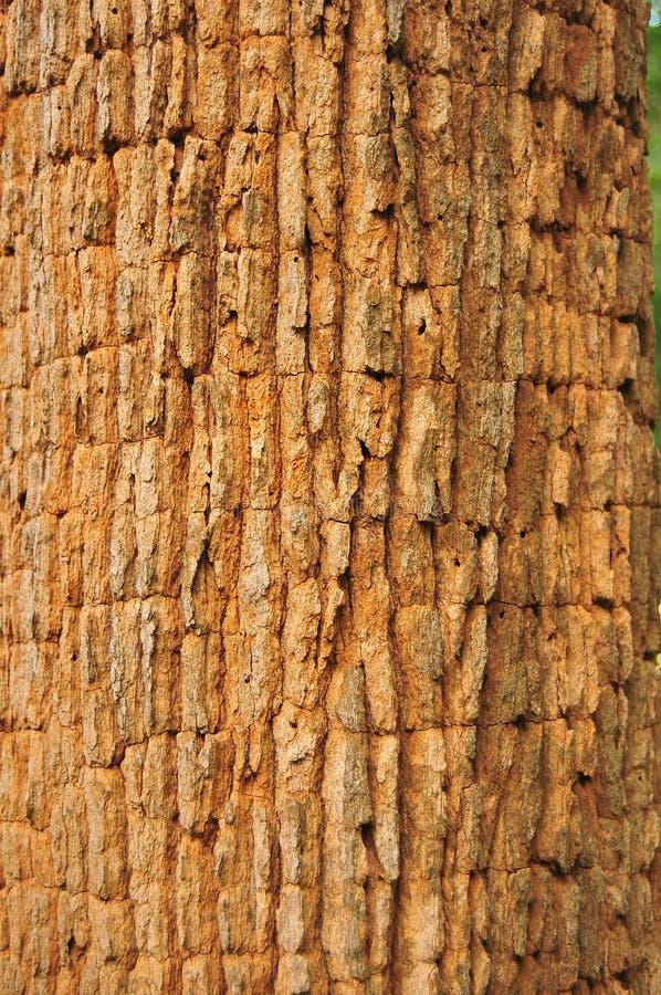Schors van hout royalty-vrije stock foto's