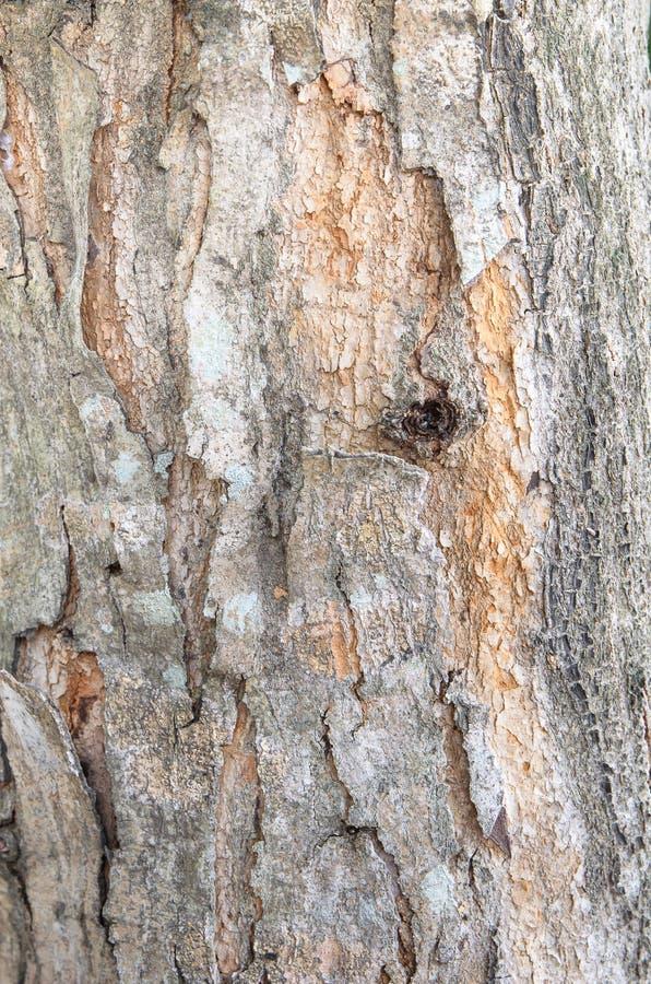 Schors van Iep. boomstam van boom, Naadloze Tileable-Textuur als achtergrond stock foto's