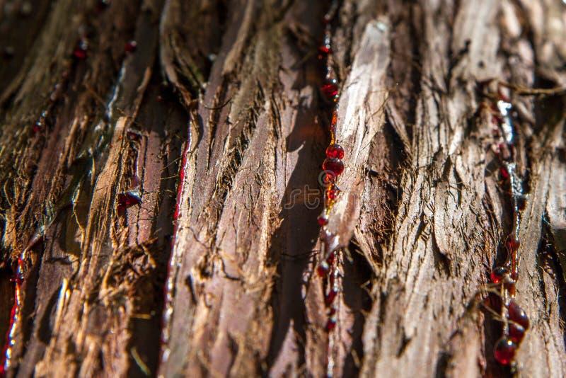 Schors van naaldbomen stock fotografie