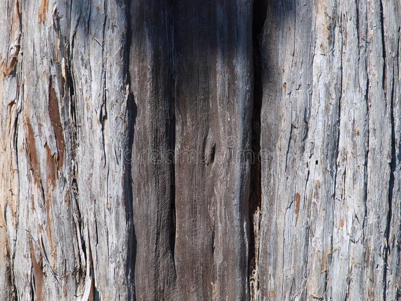 Schors van oud Cedar Tree royalty-vrije stock afbeelding