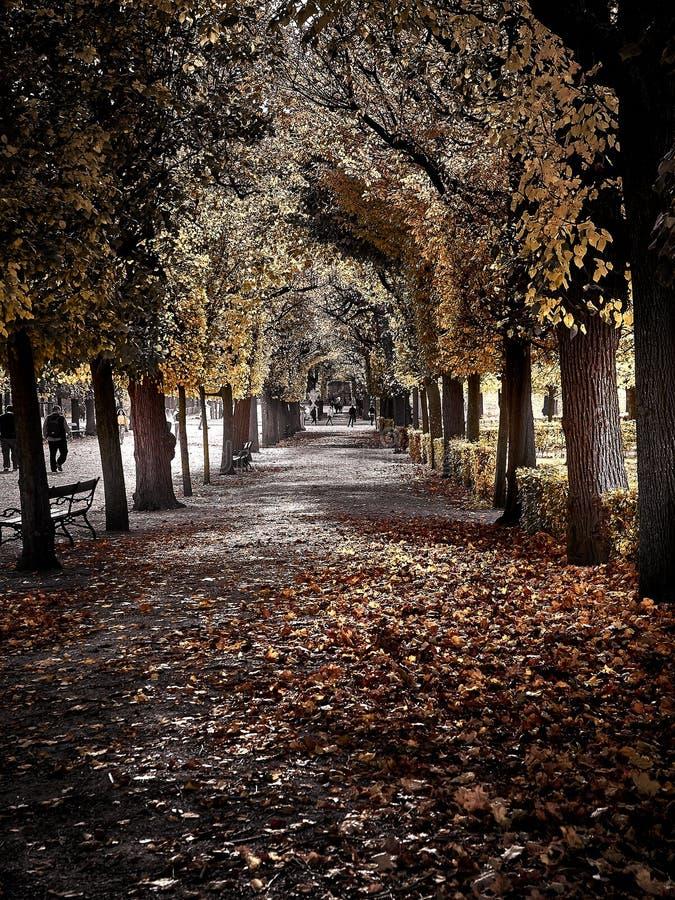 Schot van een straathoogtepunt van rode bladeren bij het park royalty-vrije stock foto