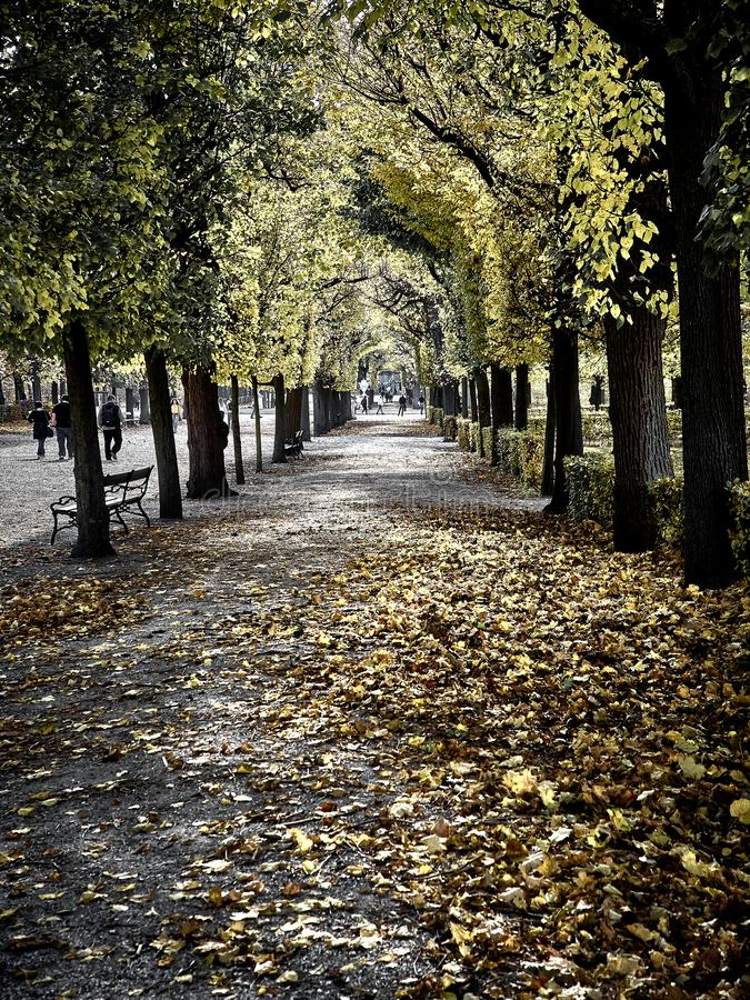 Schot van een straathoogtepunt van rode bladeren bij het park stock fotografie