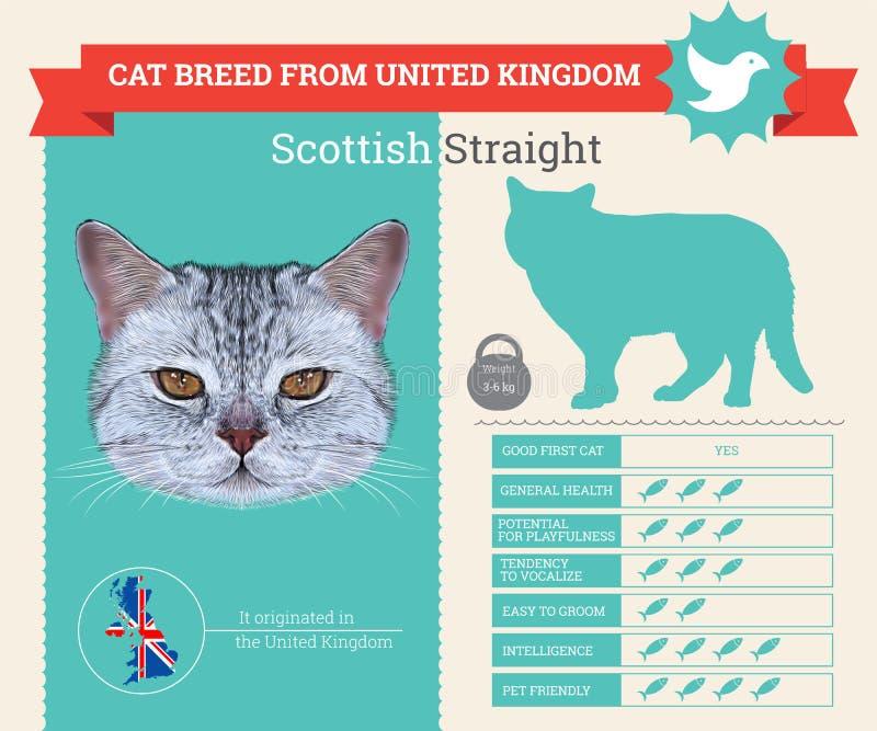Schotse Rechte infographics van het Kattenras vector illustratie