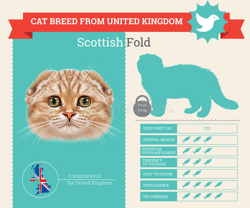 Schotse Vouwen van het Kattenras infographics royalty-vrije illustratie