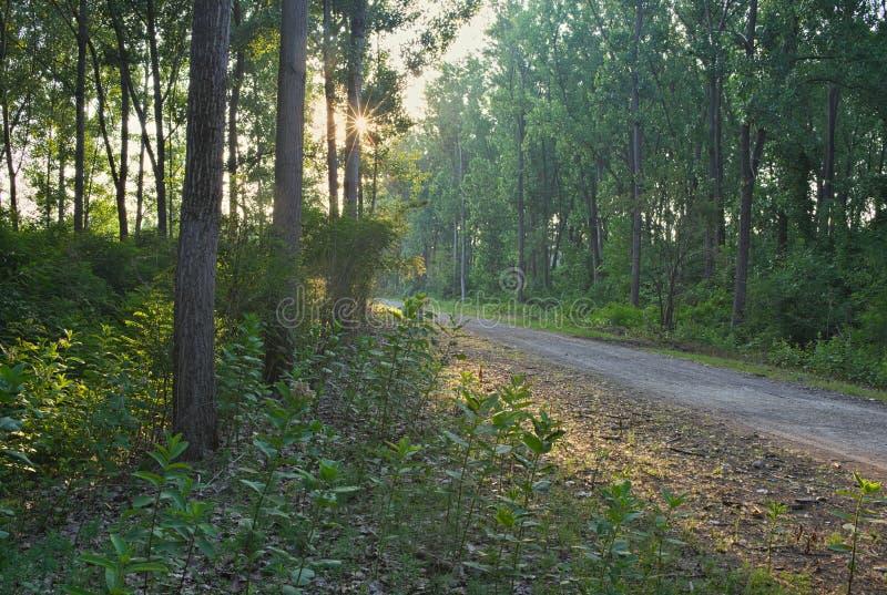 Schotterstraße, die in Wald während des Sonnenuntergangs geht lizenzfreie stockfotografie