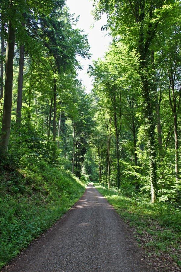 Schotterstraße durch sonnigen grünen Wald lizenzfreie stockbilder