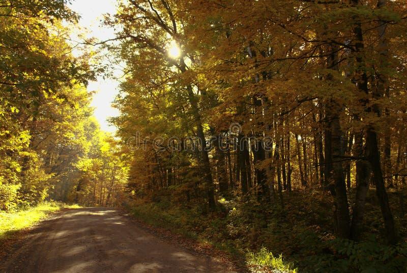 Schotterstraße umgeben durch hohe Bäume mit den Blättern, die zu den Fallfarben durch Hinckley Minnesota ändern stockfoto