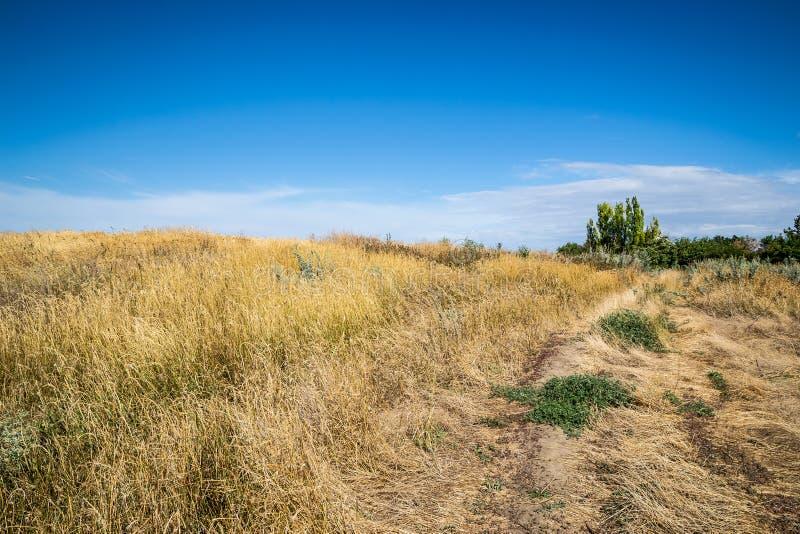 Schotterweg überwältigt mit dem trockenen Gras, das zu die Spitze des Hügels führt An einem sonnigen Sommertag stockfotografie