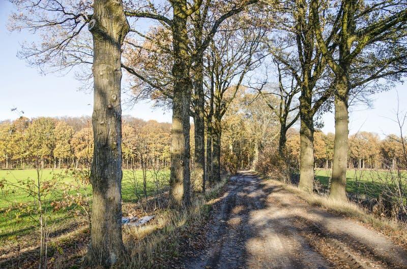 Schotterweg durch Felder und Wälder stockfoto