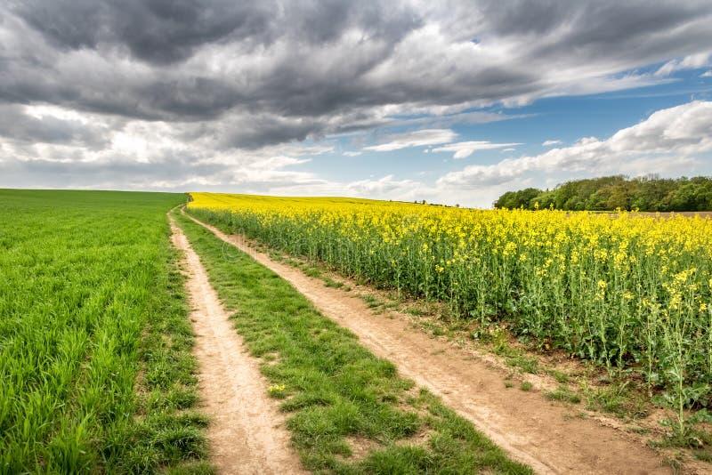 Schotterweg durch Frühlingsfelder unter bewölktem Himmel lizenzfreies stockbild