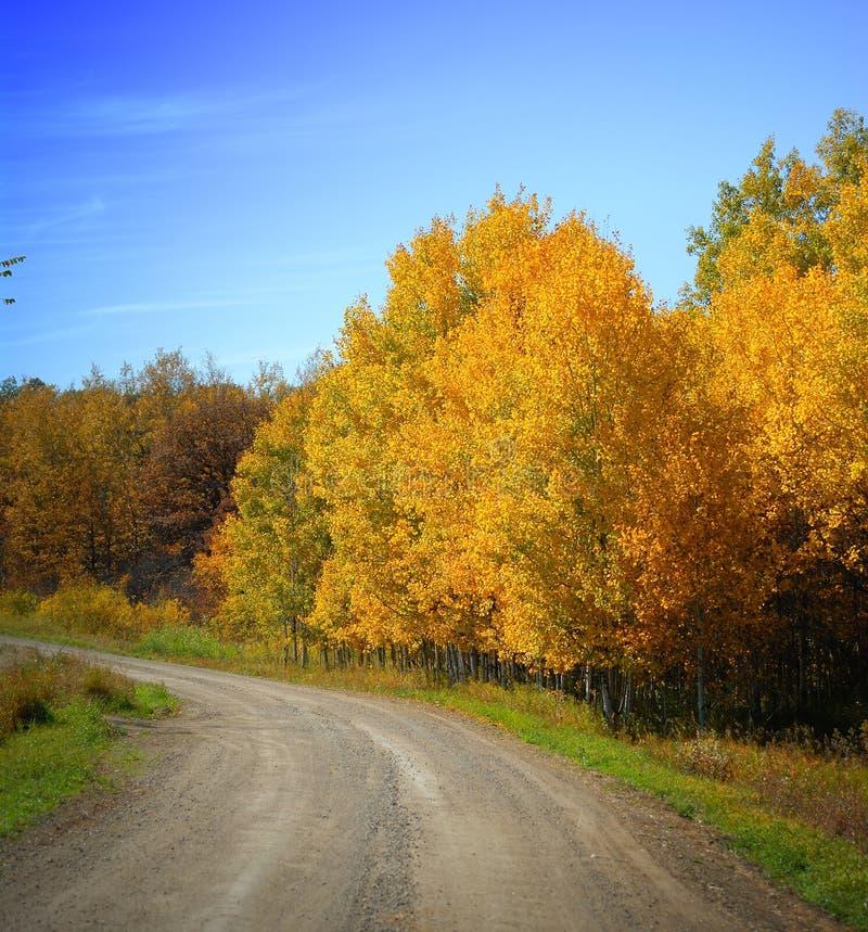 Schotterweg, Herbst-Laub, Himmel lizenzfreie stockbilder