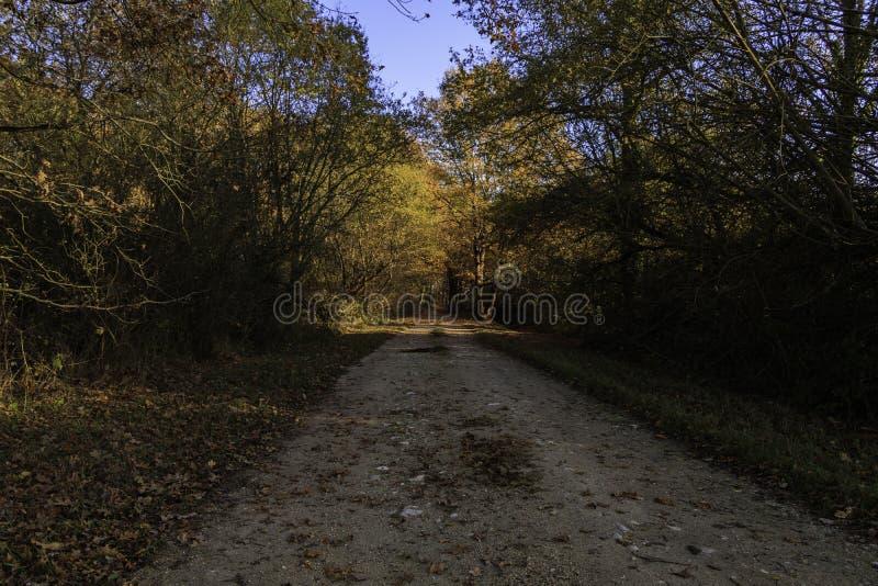 Schotterweg mitten in einem Wald mit Herbstfarben, die die Sonne mit seinem orange Licht belichtet lizenzfreies stockfoto