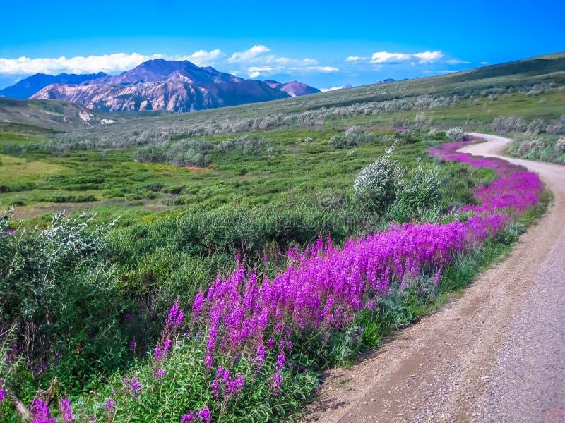 Schotterweg, Nationalpark Denali, Alaska lizenzfreies stockbild