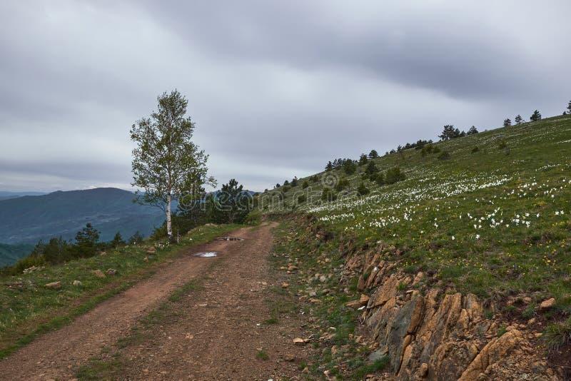 Schotterweg und ein bisschen mehr auf die Oberseite des Berges stockfoto