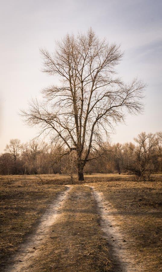 Schotterweg- und Frühlingswiese Wetter im Vorfrühling lizenzfreie stockfotos