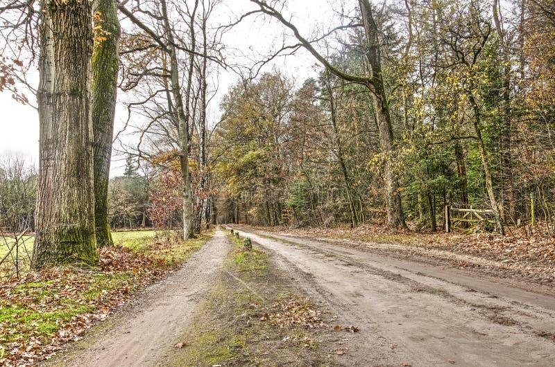 Schotterweg zwischen Wiesen und Wald lizenzfreie stockfotos