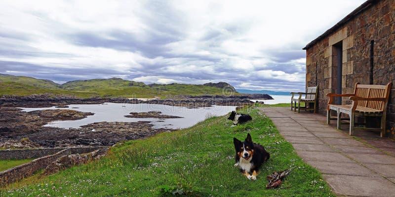 Schottische Küste mit Steinhaus und Schäferhunden Border-Collien in Schottland stockbild