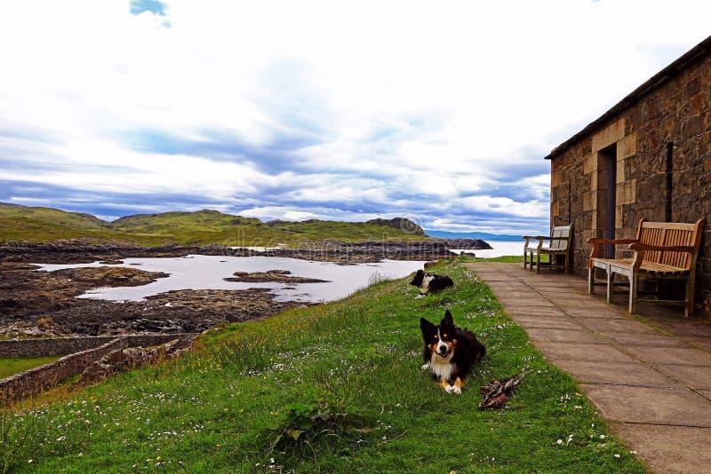 Schottische Küste mit Steinhaus und Schäferhunden Border-Collien in Schottland stockfotografie