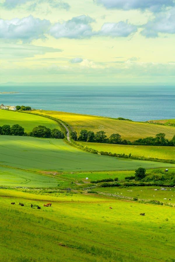 Schottische Sommerlandschaft, Ost-Lothians, Schottland, Großbritannien stockbild