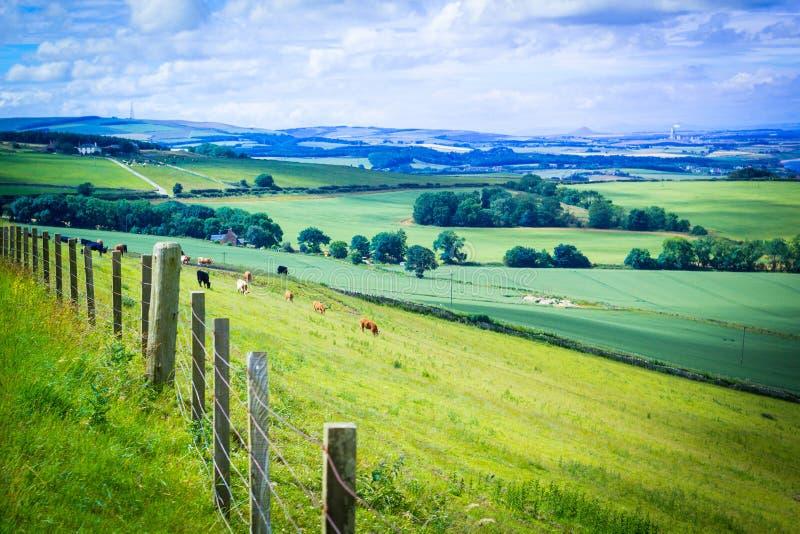 Schottische Sommerlandschaft, Ost-Lothians, Schottland, Großbritannien lizenzfreies stockbild